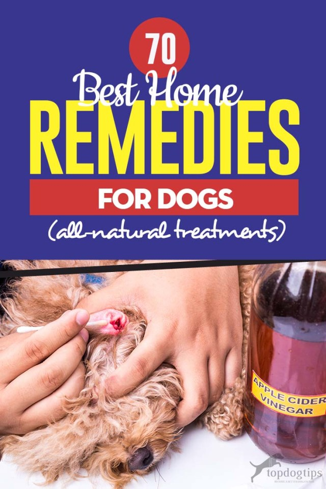 Top 70 Best Home Remedies for Dogs