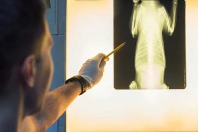 Injury to dog's pelvis