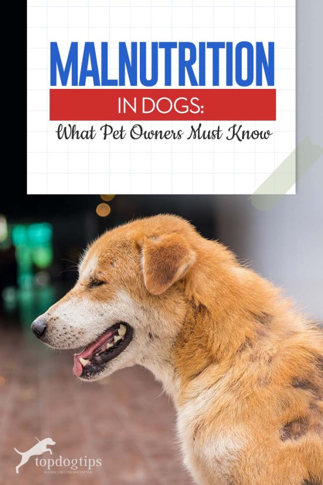 Malnutrition in Dogs - What Pet Owners Must Know