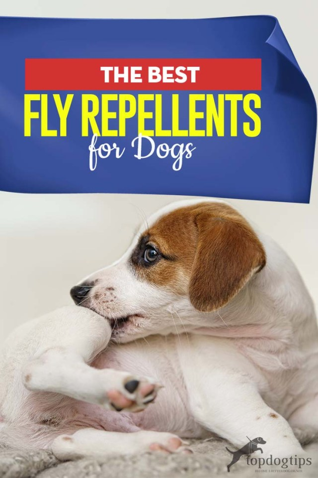 Top Best Fly Repellents for Dogs