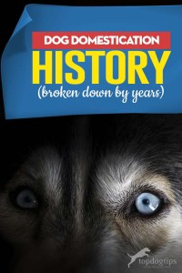 The Dog Domestication History (In Years)