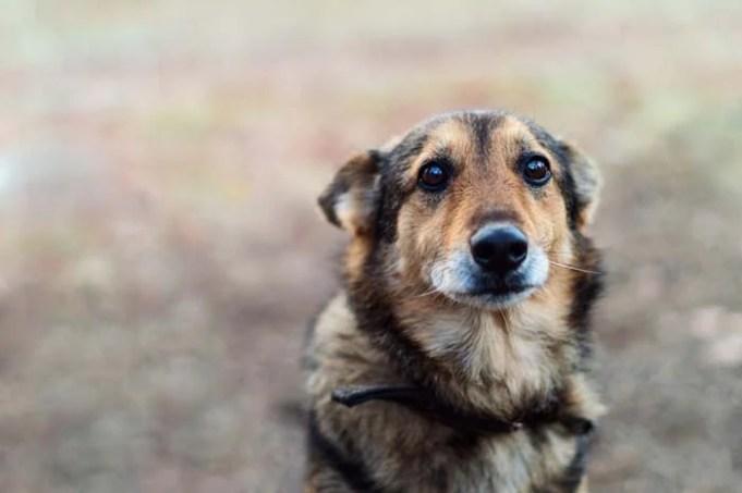 4 Common Ways People Abuse Animals