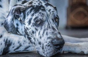 6 Ways to Prevent and Treat Gastric Dilatation Volvulus (Dog Bloat)