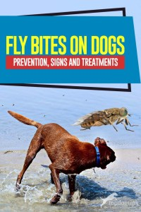 Fly Bites on Dogs Guide - Prevention, Signs and Treatments