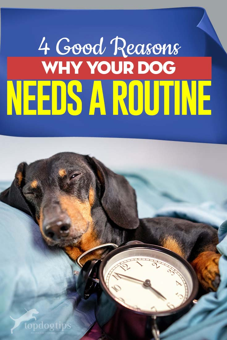 The 4 Good Reasons Why Your Dog Needs a Routine