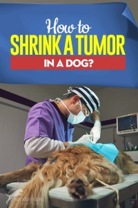 Tips on How to Shrink a Tumor in a Dog