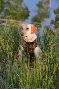What's a Dog Hunting Vest and When You Need It