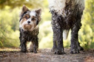 Why and How Does Dog's Fur Get Stained