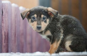 13 Ways to Prevent Hypothermia and Frostbite in Dogs
