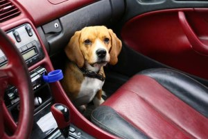 Best dog car anxiety relief for dogs