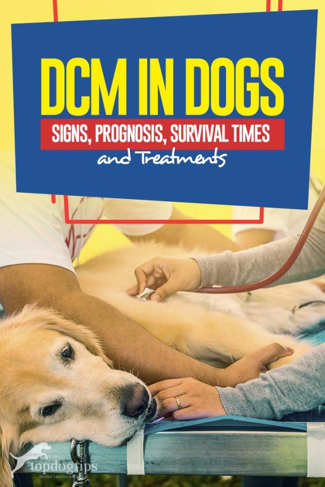 Guide to DCM in Dogs