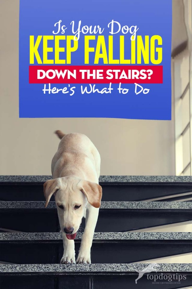 Here What You Should Do If Your Dog Keeps Falling Down the Stairs