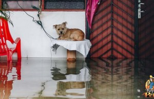 How to Prepare Your Dog for Disasters