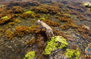 Is Blue-Green Algae Toxic for Dogs
