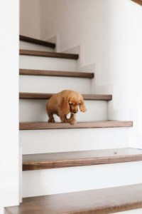 Stairs for Puppies