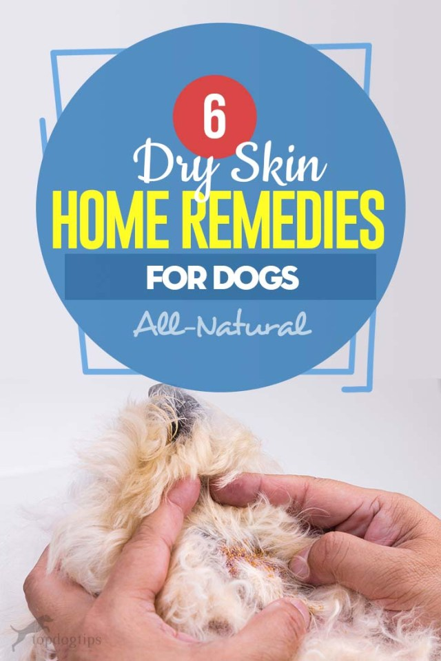 The 6 Dry Skin Home Remedies for Dogs