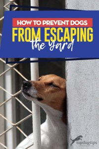 Tips on How to Prevent Dogs from Escaping the Yard