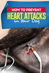 Tips on How to Prevent a Dog Heart Attack
