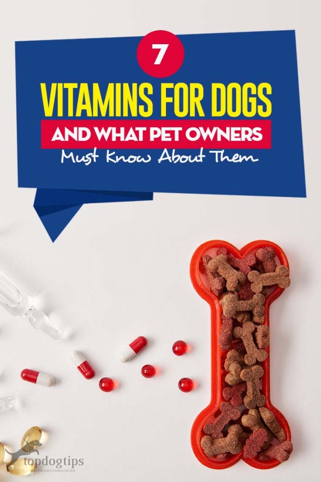 Top 7 Vitamins for Dogs That All Dog Owners Need to Know About