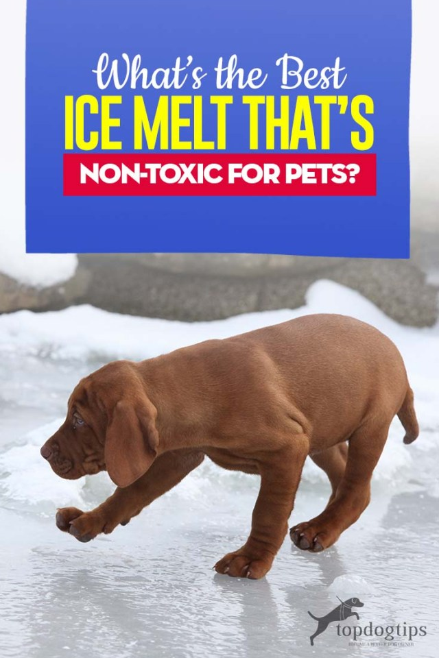 What Is the Best Ice Melt Safe and Nontoxic for Pets