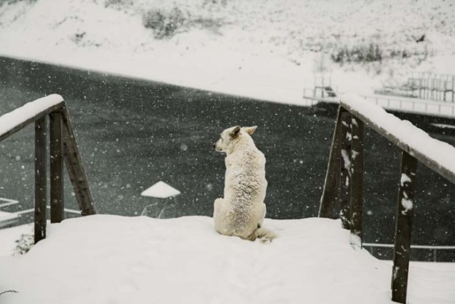 Winter temperatures for dogs