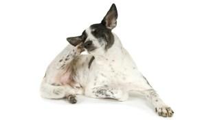 dog dry skin home remedy