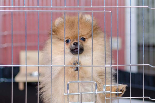 5 Reasons for Your Dog Whining In Crate