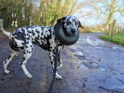 Best Inflatable Dog Collars