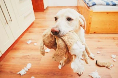 Dangers of kids toys for dogs