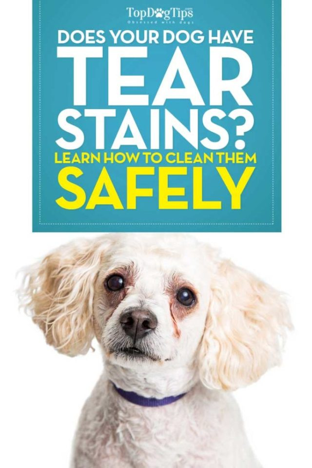 How to Remove Tear Stains on Dogs (Epiphora)