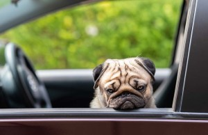 How to Solve Your Puppy Car Sickness