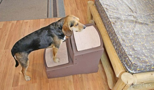 Pet Gear Dog Stairs for High Bed Review
