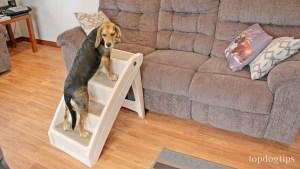 PetSafe Solvit PupSTEP Dog Stairs for Bed Review