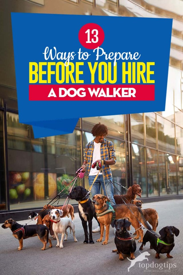 The 13 Ways to Prepare Before You Hire a Dog Walker