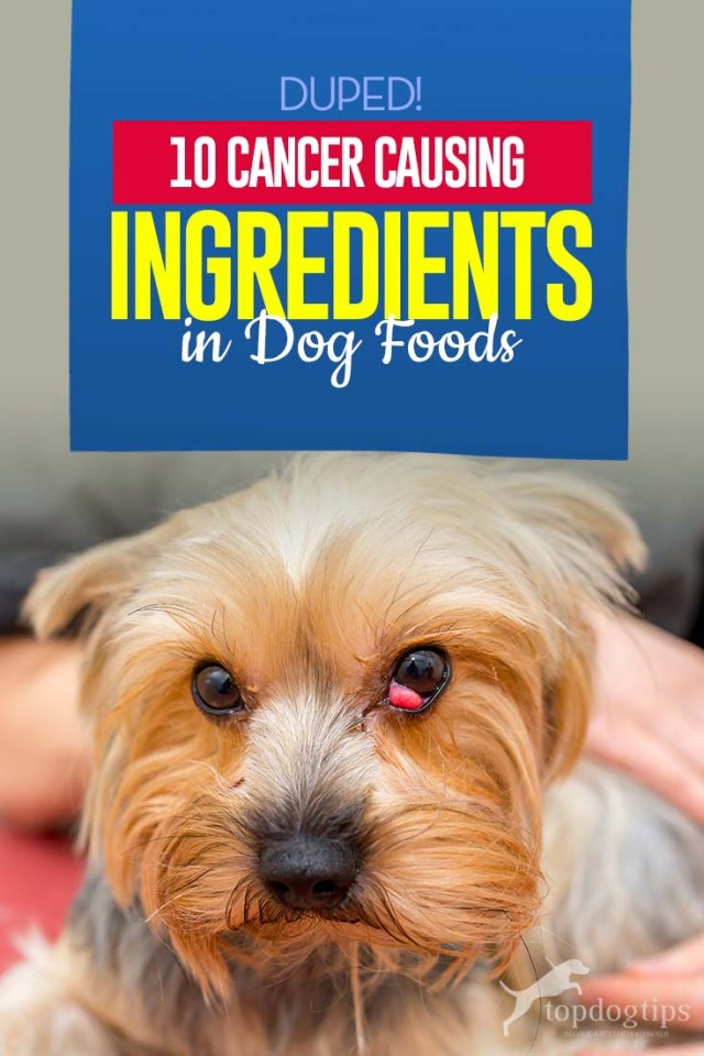 Top 10 Cancer Causing Ingredients in Dog Foods
