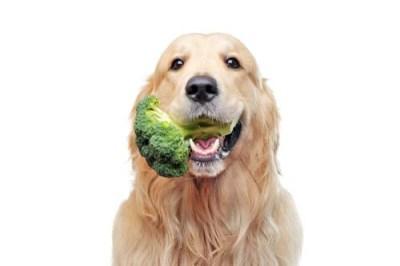 Vitamin K for dogs