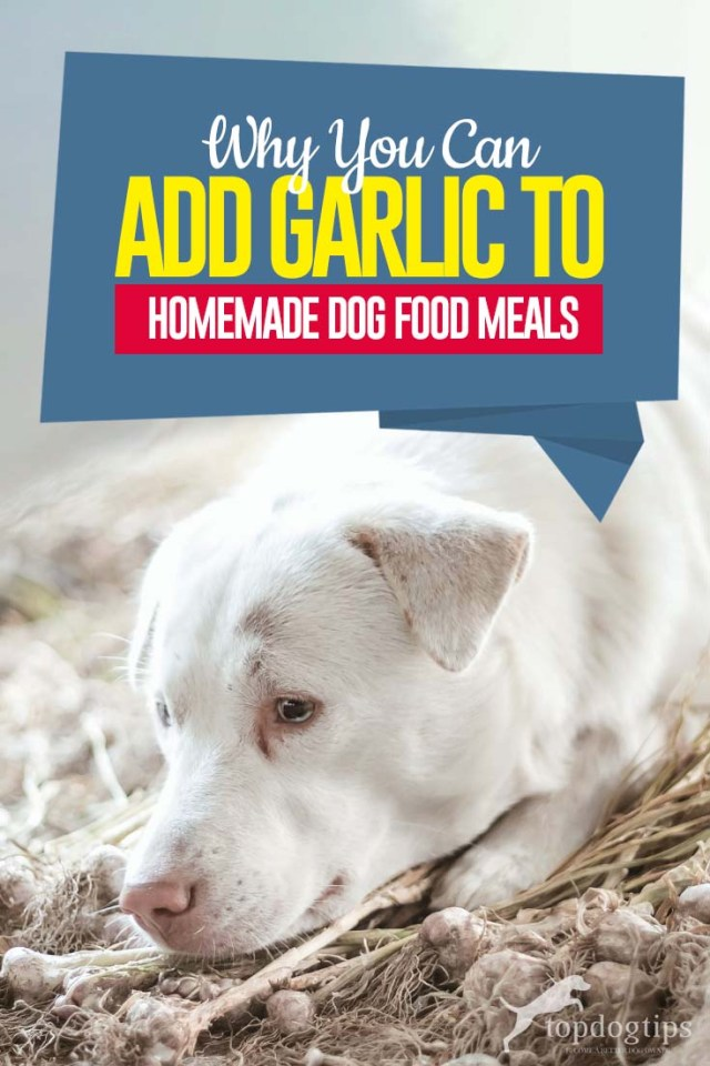 Why Add Garlic to Homemade Dog Food Recipes