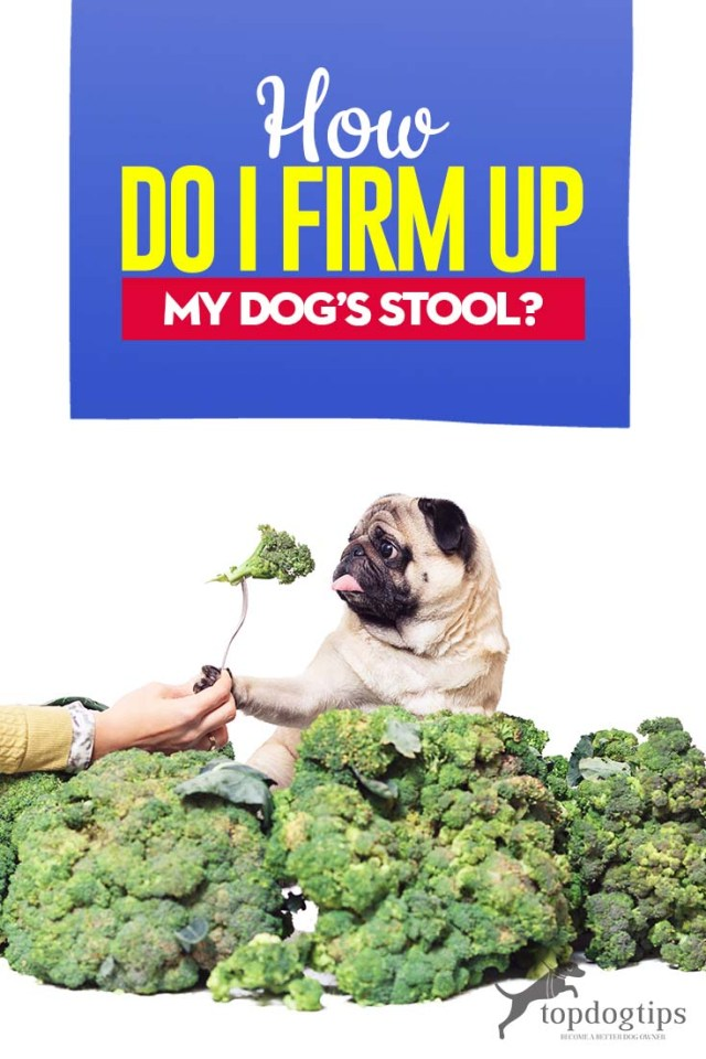 How Do I Firm Up My Dog's Stool Tips