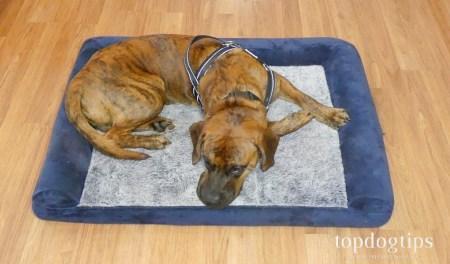 Rabbitgoo dog bed test
