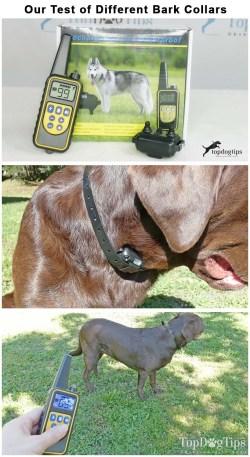 Testing the Best Dog Bark Collars