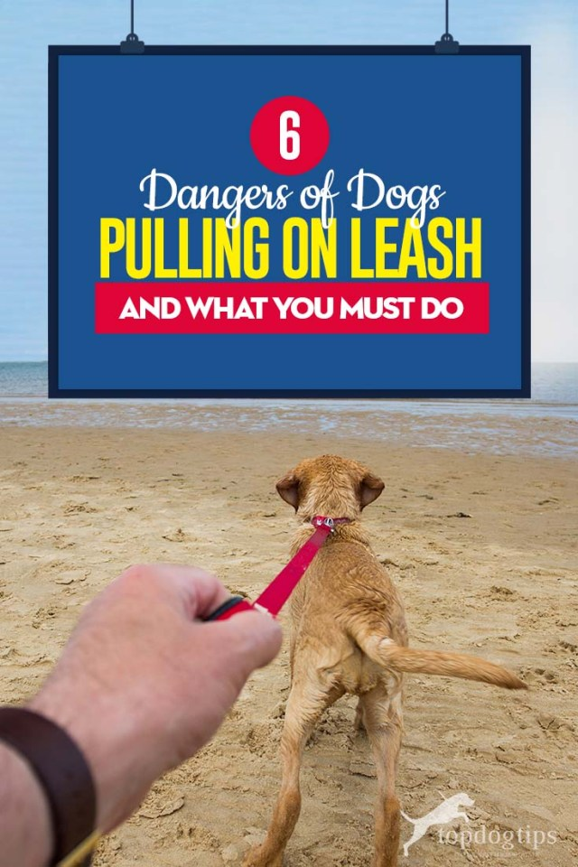 The 6 Dangers of Dogs Pulling on Leash (And What You Must Do)