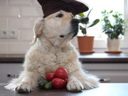 Tomatoes in Home Cooked Dog Food Recipes