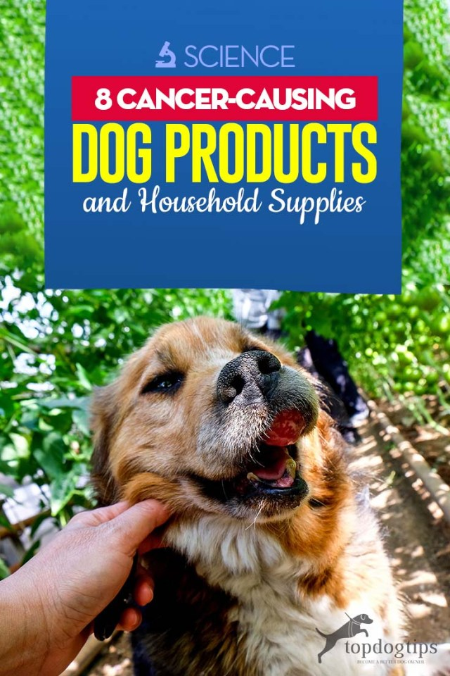 Top 8 Cancer-Causing Dog Products and Household Supplies (Based on Studies)