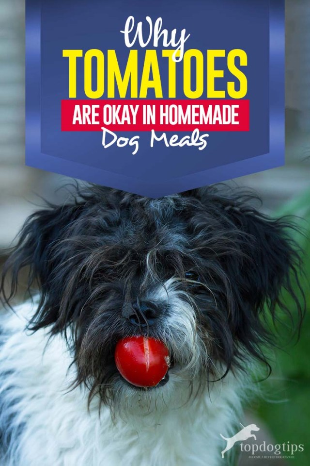 Why Add Tomatoes in Home Cooked Dog Food Recipes