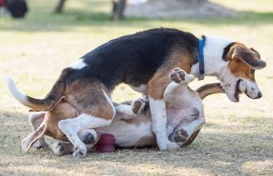 Your Dog Bit Another Dog - Here Are Your Next Steps
