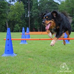 Hurdle Set for Fitness and Agility from Lord Anson