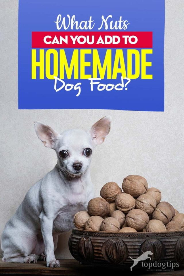 Advice on Adding Nuts to Homemade Dog Food Recipes