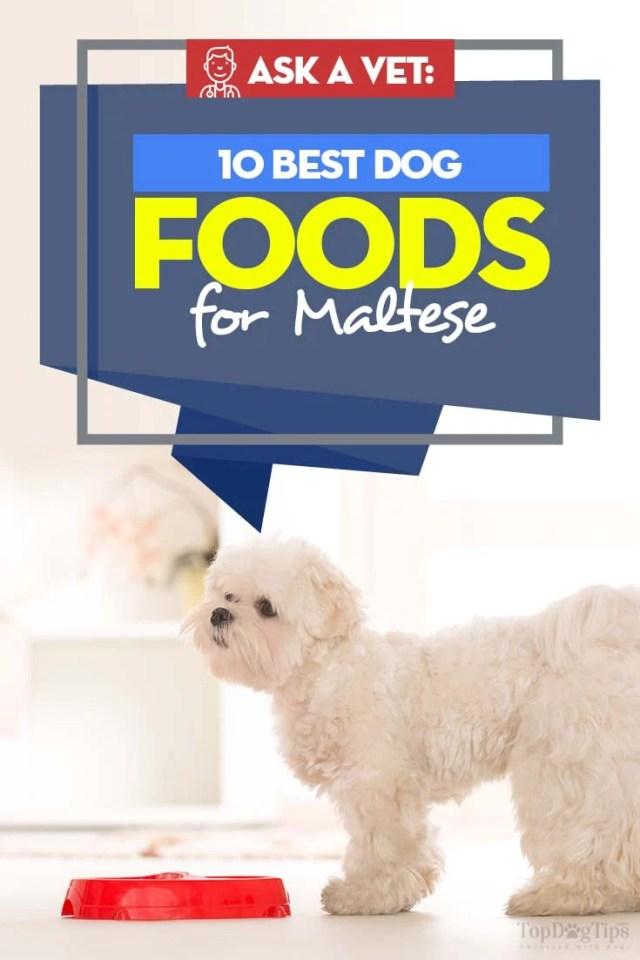 Best Dog Food for Maltese - 10 Vet Recommended Brands