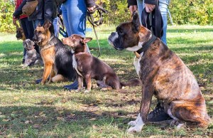 Dog Personality Test - Requirements and Testing Process