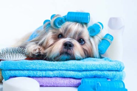 How to Keep Your Dog Smelling Fresh Between Baths